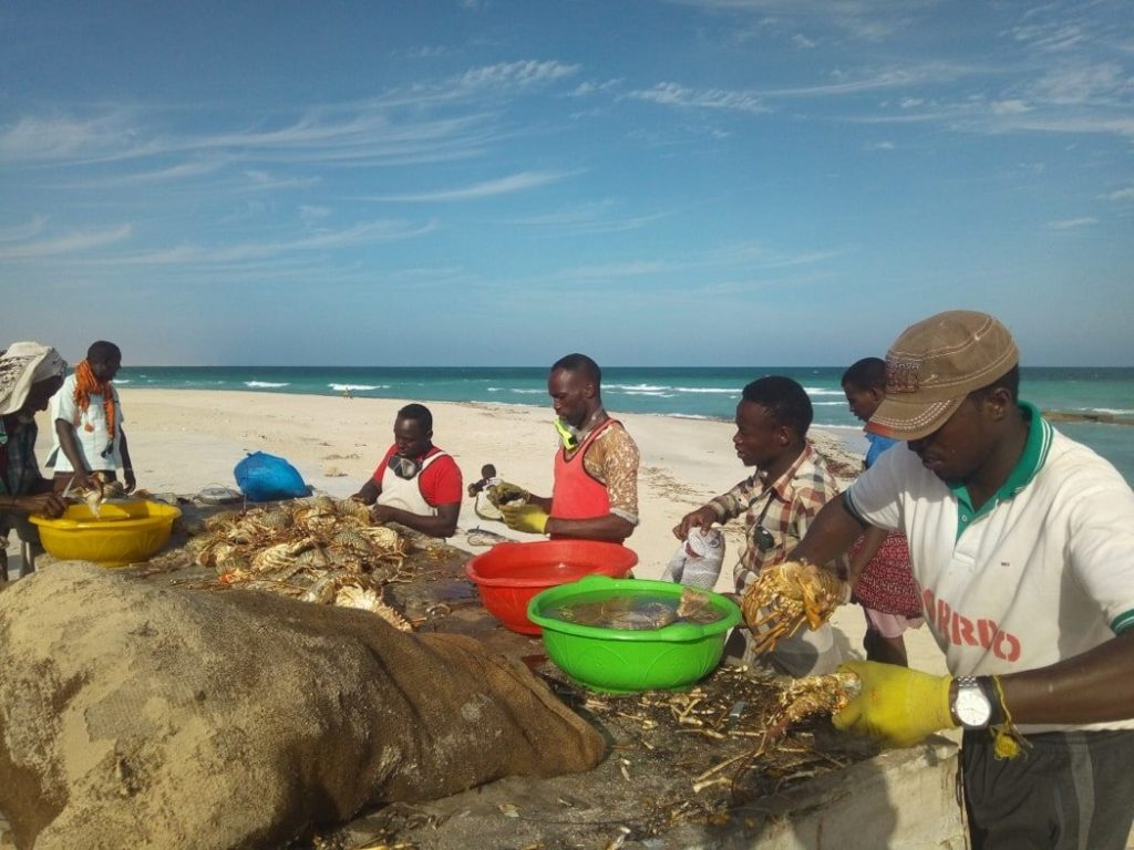 Fishermen prepare their lobster catch for transportation to Mogadishu by air.